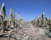 desertificazione 2